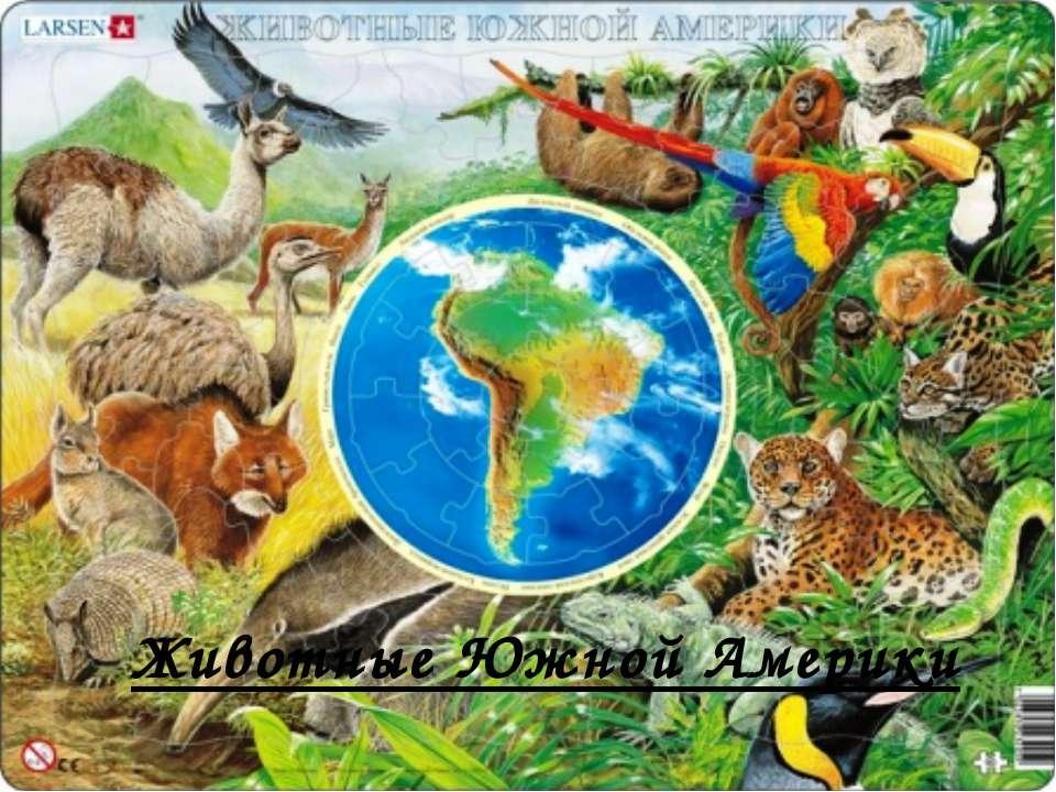 Животные Южной Америки
