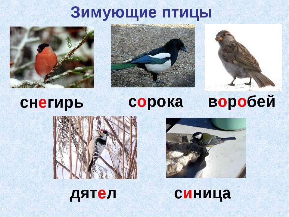 снегирь сорока воробей дятел синица Зимующие птицы