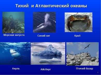 * Тихий и Атлантический океаны Морская капуста Синий кит Краб Акула Птичий ба...