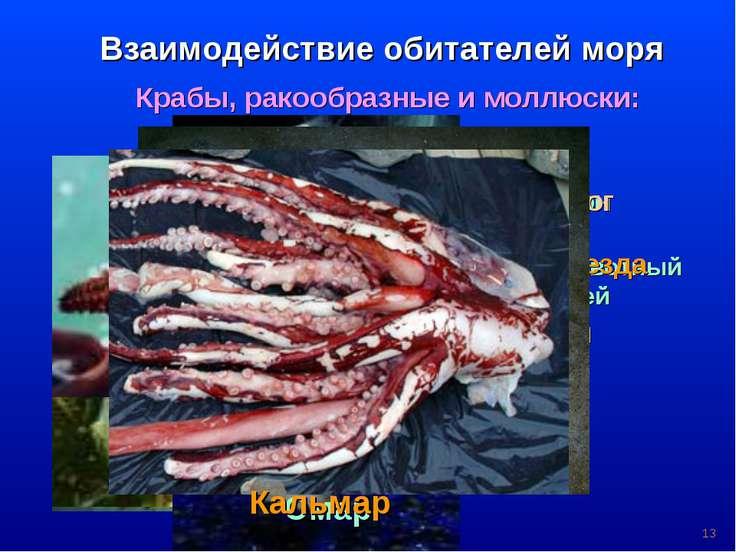 * Взаимодействие обитателей моря Крабы, ракообразные и моллюски: Планктон кор...