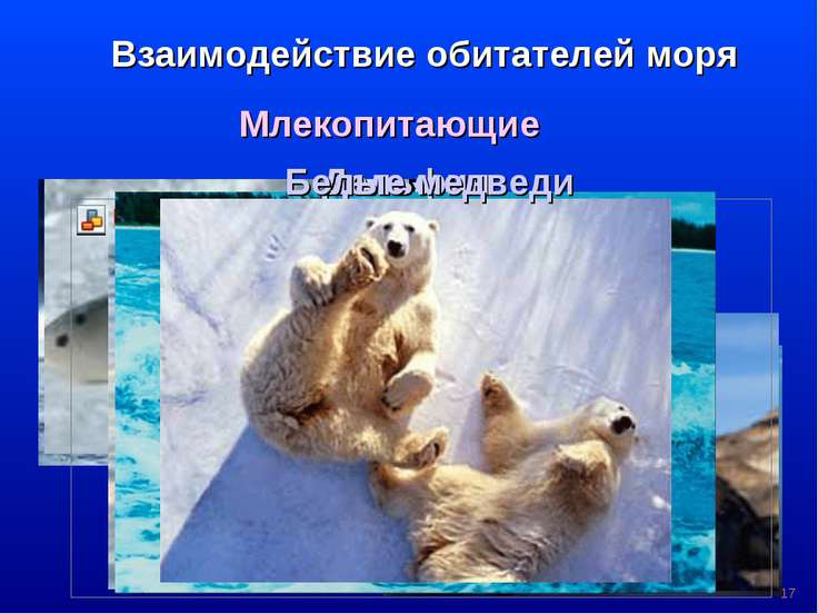 * Взаимодействие обитателей моря Млекопитающие Киты Тюлени Нерпа Моржи Дельфи...