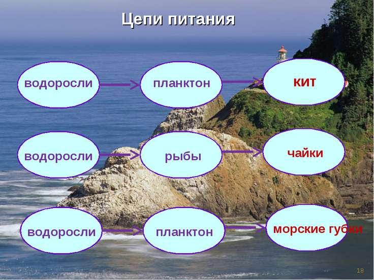 * Цепи питания водоросли планктон кит водоросли рыбы чайки водоросли планктон...