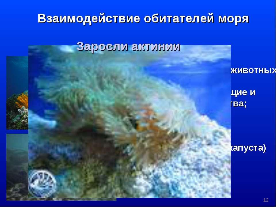 * Взаимодействие обитателей моря Водоросли пища и дом для мелких животных; до...