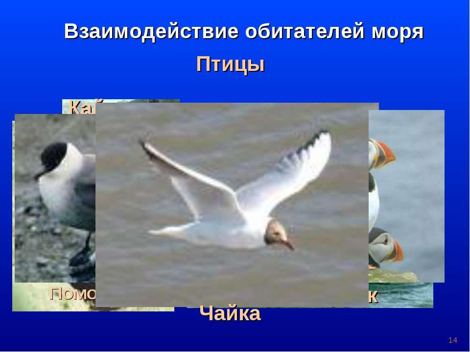 * Птицы Взаимодействие обитателей моря Баклан Пингвин Альбатрос Гага Гагара К...