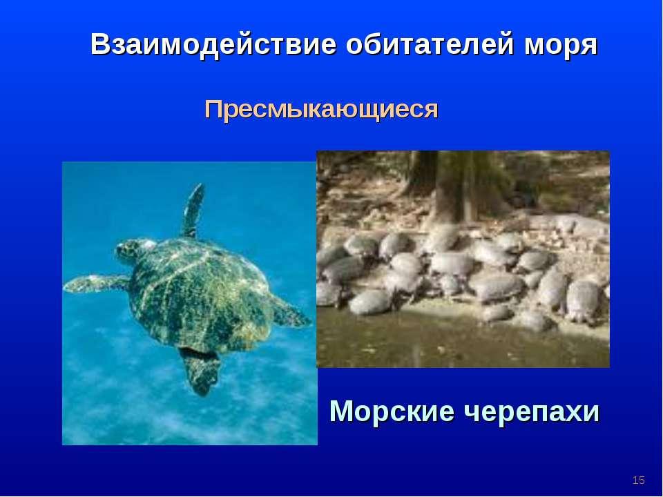 * Взаимодействие обитателей моря Пресмыкающиеся Морские черепахи