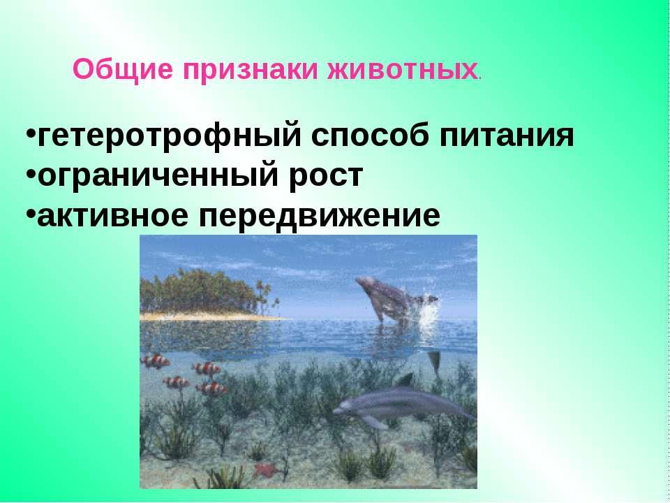 гетеротрофный способ питания ограниченный рост активное передвижение Общие пр...