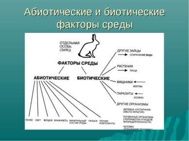 Абиотические и биотические факторы среды