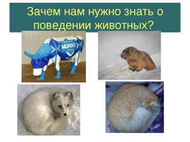 Зачем нам нужно знать о поведении животных?