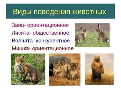 Виды поведения животных Заяц- ориентационное Лисята- общественное Волчата- ко...
