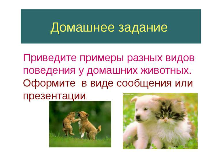 Домашнее задание Приведите примеры разных видов поведения у домашних животных...