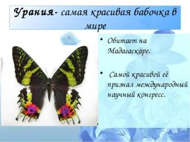 Урания- самая красивая бабочка в мире Обитает на Мадагаскаре. Самой красивой ...