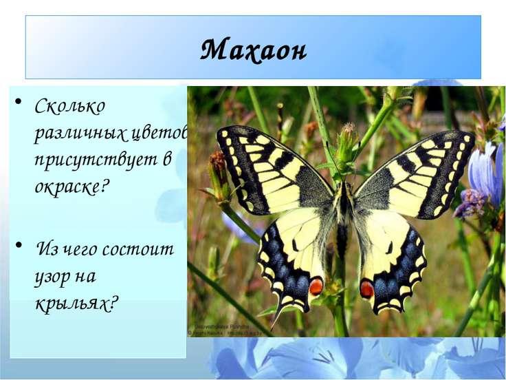 Махаон Сколько различных цветов присутствует в окраске? Из чего состоит узор ...