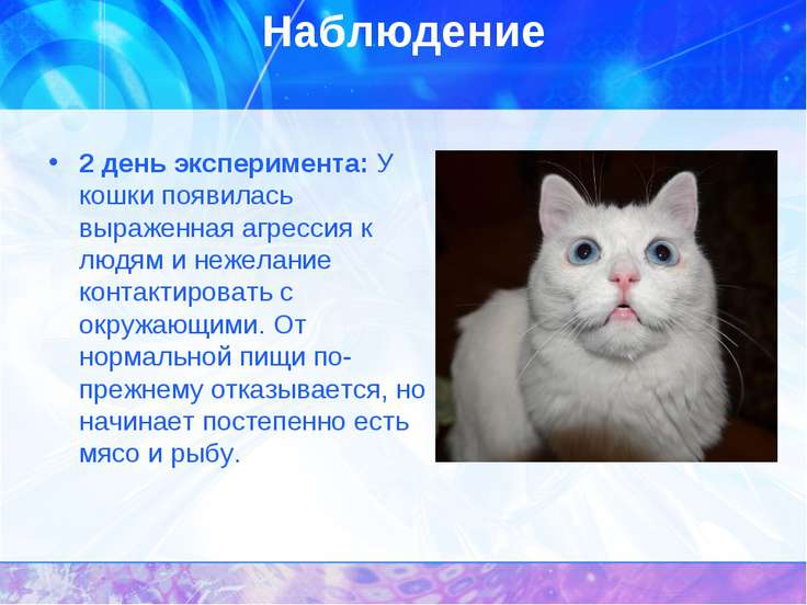 Наблюдение 2 день эксперимента: У кошки появилась выраженная агрессия к людям...
