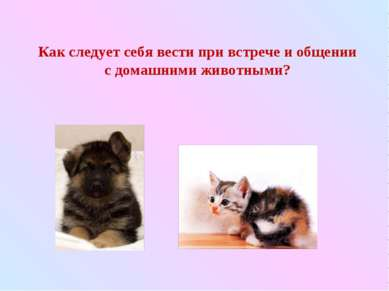 Как следует себя вести при встрече и общении с домашними животными?