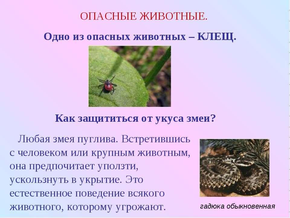 ОПАСНЫЕ ЖИВОТНЫЕ. Одно из опасных животных – КЛЕЩ. Как защититься от укуса зм...
