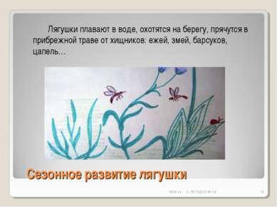 Сезонное развитие лягушки * С- Пб ГБДОУ № 112 * Лягушки плавают в воде, охотя...