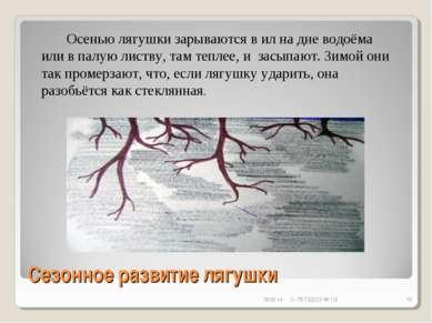 Сезонное развитие лягушки * С- Пб ГБДОУ № 112 * Осенью лягушки зарываются в и...