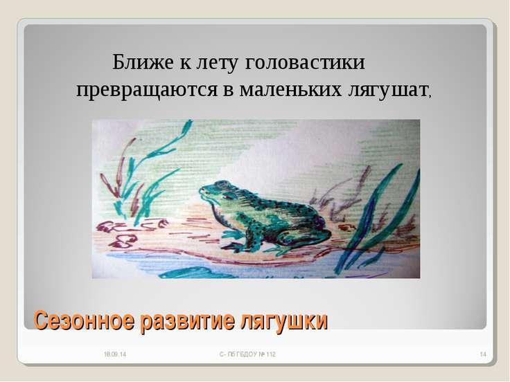 Сезонное развитие лягушки * С- Пб ГБДОУ № 112 * Ближе к лету головастики прев...