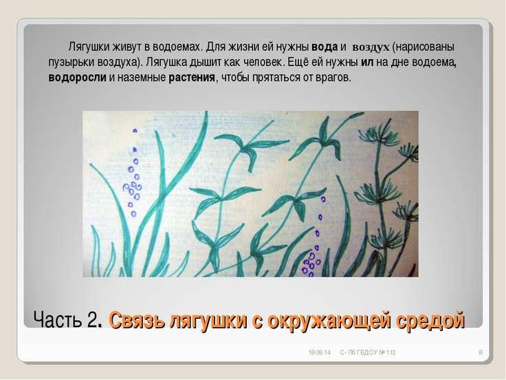 Часть 2. Связь лягушки с окружающей средой * С- Пб ГБДОУ № 112 * Лягушки живу...