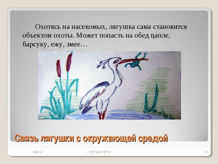 Связь лягушки с окружающей средой * С- Пб ГБДОУ № 112 * Охотясь на насекомых,...