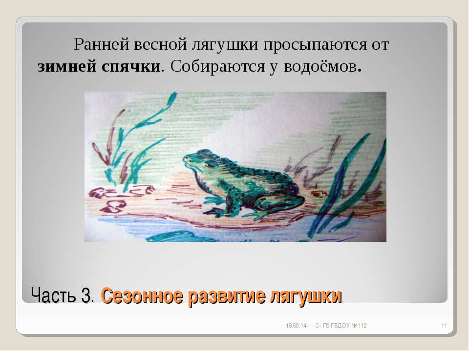 Часть 3. Сезонное развитие лягушки * С- Пб ГБДОУ № 112 * Ранней весной лягушк...