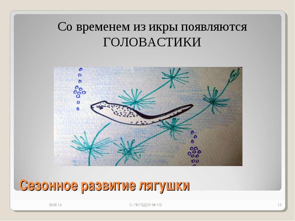 Сезонное развитие лягушки * С- Пб ГБДОУ № 112 * Со временем из икры появляютс...