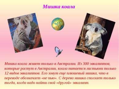 Мишка коала Мишка коала живет только в Австралии. Из 300 эвкалиптов, которые ...