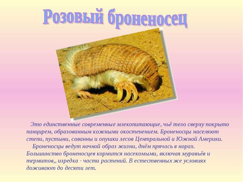 Это единственные современные млекопитающие, чьё тело сверху покрыто панцирем,...