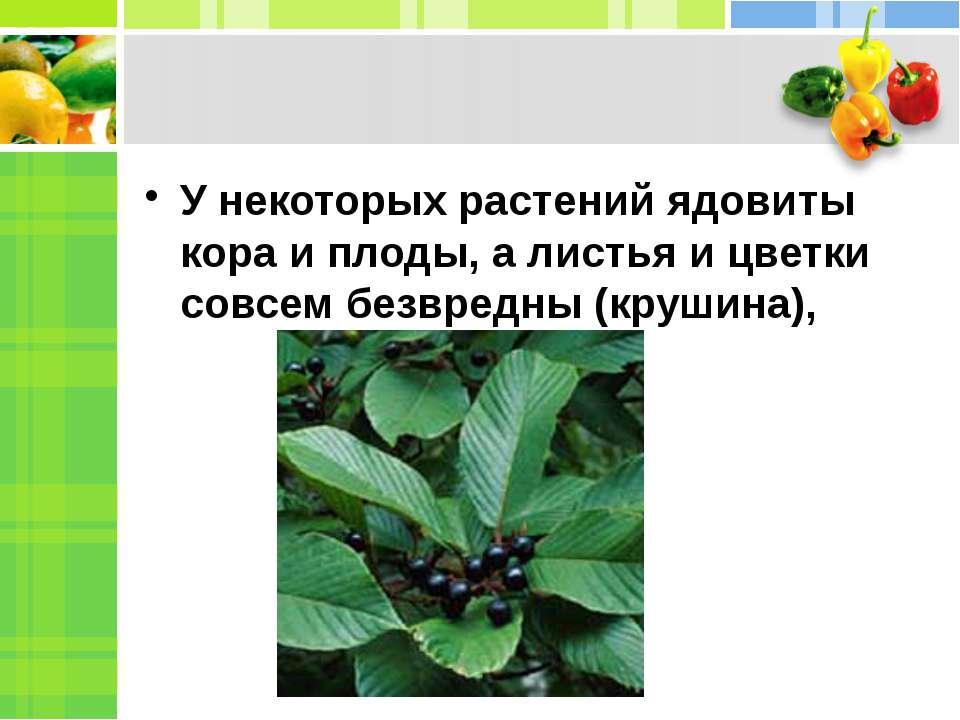 У некоторых растений ядовиты кора и плоды, а листья и цветки совсем безвредны...
