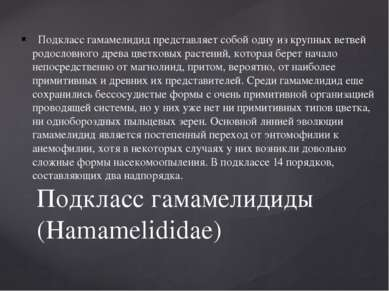 Подкласс гамамелидид представляет собой одну из крупных ветвей родословного...