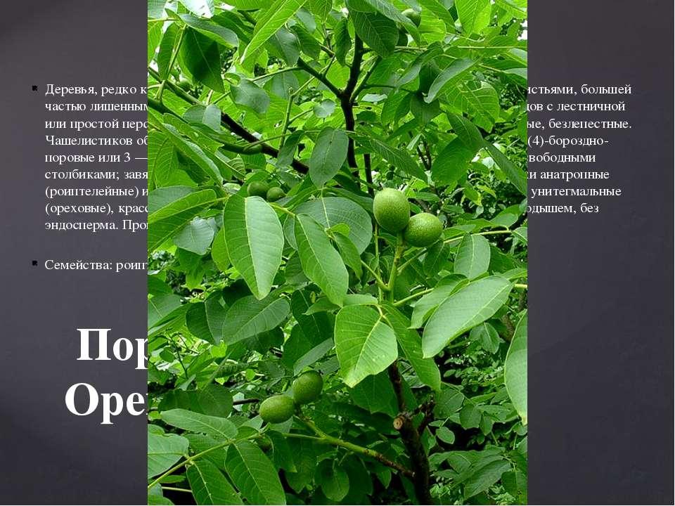 Деревья, редко кустарники с очередными или реже супротивными перистыми листья...