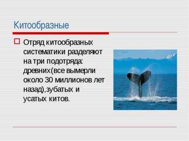 Китообразные Отряд китообразных систематики разделяют на три подотряда: древн...