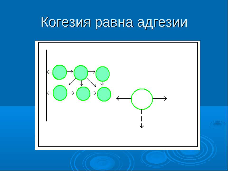 Когезия равна адгезии