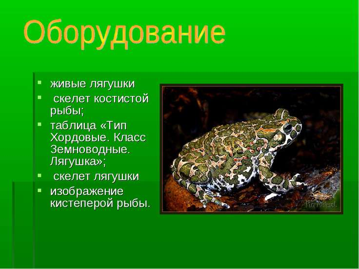 живые лягушки скелет костистой рыбы; таблица «Тип Хордовые. Класс Земноводные...