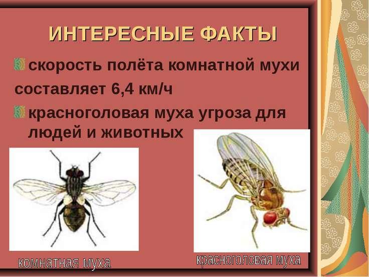 ИНТЕРЕСНЫЕ ФАКТЫ скорость полёта комнатной мухи составляет 6,4 км/ч красногол...
