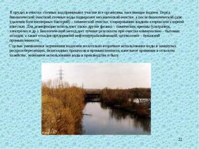 * В прудах в очистке сточных вод принимают участие все организмы, населяющие ...
