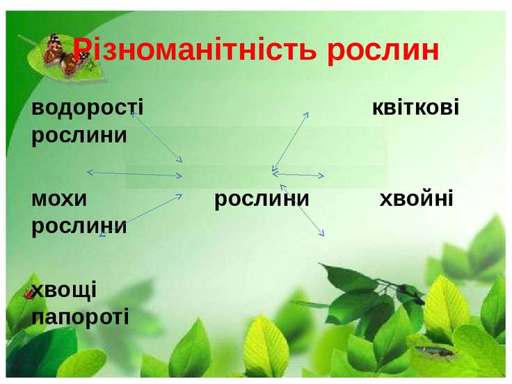 Різноманітність рослин водорості квіткові рослини мохи рослини хвойні рослини...