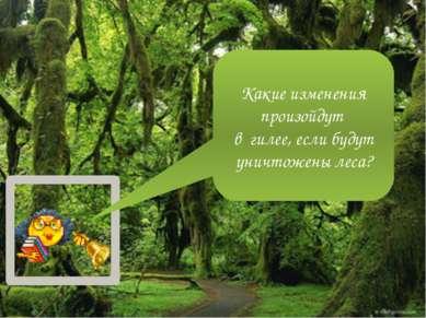 Какие изменения произойдут в гилее, если будут уничтожены леса?