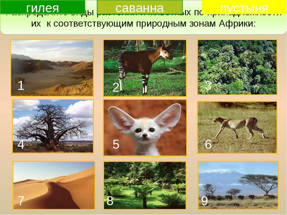 Повторение изученного Распределите виды растений и животных по принадлежности...