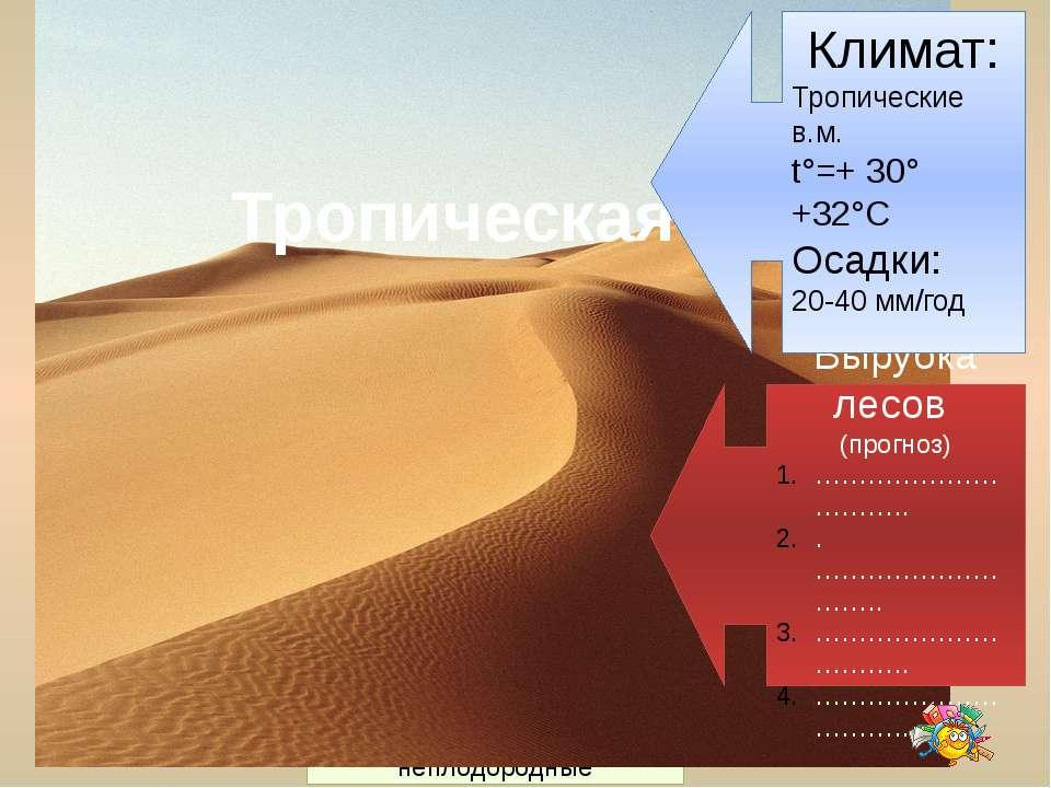Нижний ярус Средний ярус Верхний ярус Почвы 2-3 см красно-жёлтые ферралитные,...