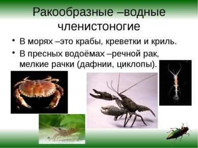 Ракообразные –водные членистоногие В морях –это крабы, креветки и криль. В пр...