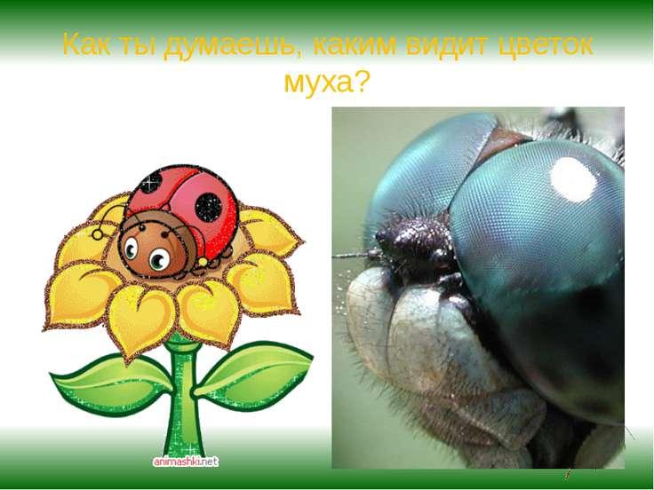 Как ты думаешь, каким видит цветок муха?