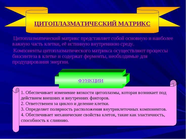 Цитоплазматический матрикс представляет собой основную и наиболее важную част...