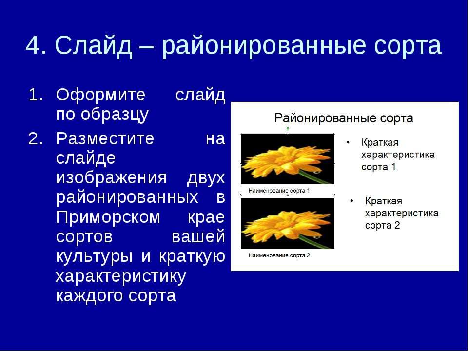 4. Слайд – районированные сорта Оформите слайд по образцу Разместите на слайд...