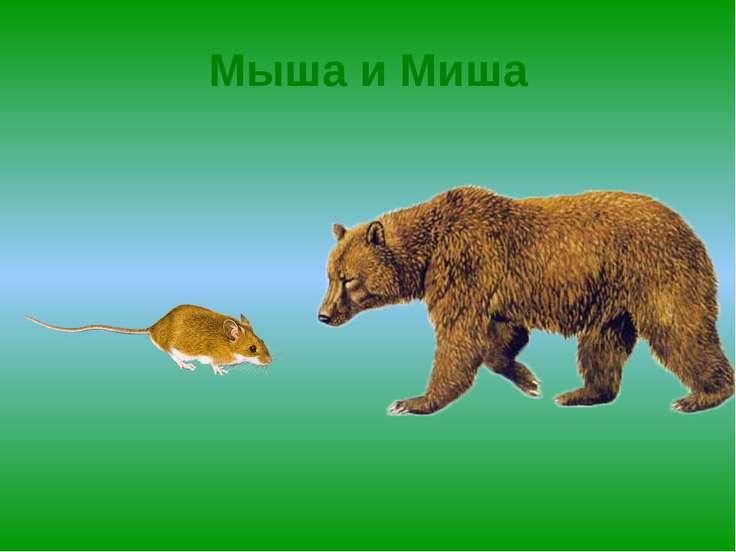 Мыша и Миша