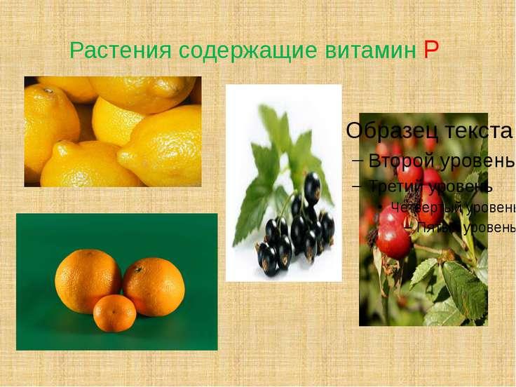 Растения содержащие витамин Р