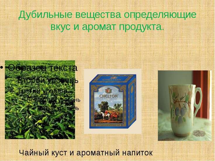 Дубильные вещества определяющие вкус и аромат продукта. Чайный куст и ароматн...