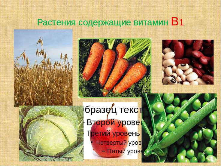 Растения содержащие витамин В1