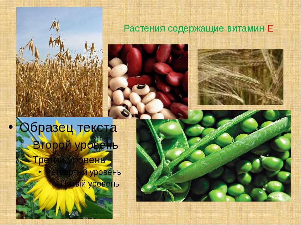 Растения содержащие витамин Е