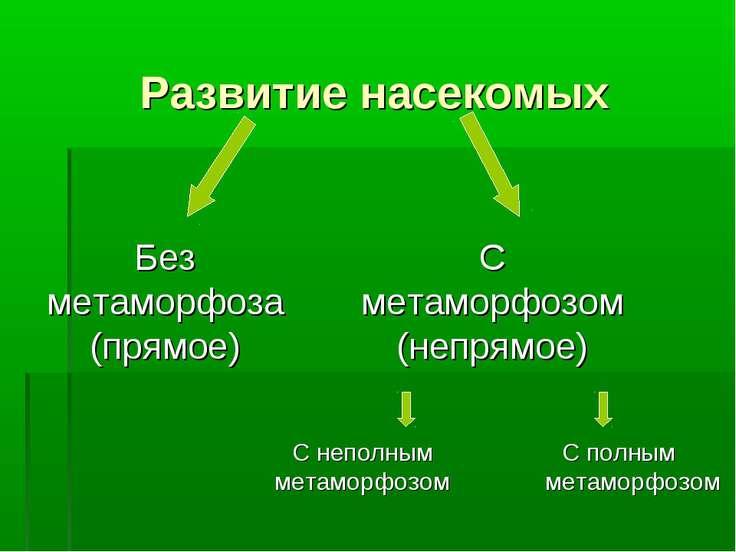 Развитие насекомых С полным метаморфозом Без метаморфоза (прямое) С метаморфо...